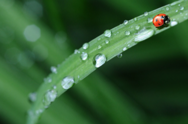 風に強い傘ブラントとさすべえの組み合わせが雨天で最強!